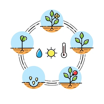 Plant growth stages infographics planting fruits, vegetables process. flat style