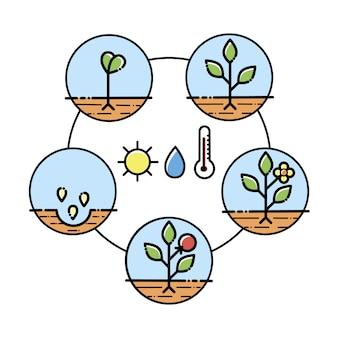 植物の成長段階のインフォグラフィック、植栽の指示、プロセス。