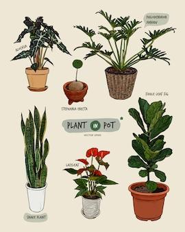 냄비에 식물, 손으로 그리는 스케치 벡터.