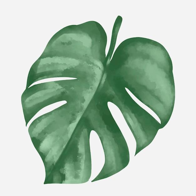 Vettore di elemento foglia di pianta monstera Vettore gratuito