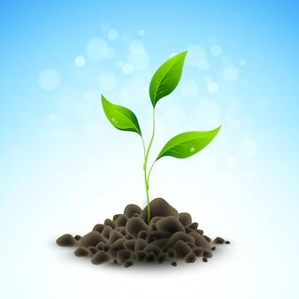 식물 묘목 성장. 삽화