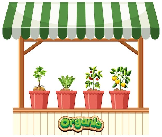 白い背景の上の縞模様の日除けの植物店