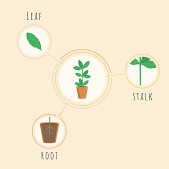 Plant structure vector banner template