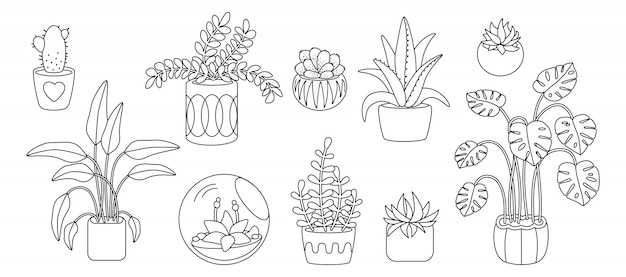 Plant and succulents, potted ceramic cartoon doodle line set. black linear flat house indoor flower. house plants, cactus, monstera, aloe flowerpot. interior decor collection. illustration