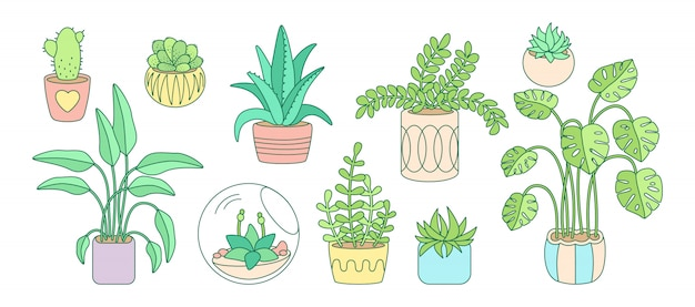 Plant and succulents, potted ceramic cartoon doodle line set. color linear flat house indoor flower. house plants, cactus, monstera, aloe flowerpot. interior decor collection. illustration