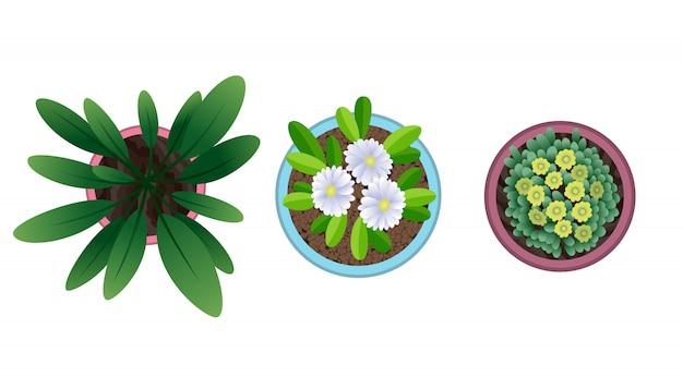 냄비에 식물 평면도. 집 식물 세트. 선인장, 녹색 잎 개념. 인테리어 하우스 원예 디자인. 꽃과 다른 집 식물의 집합입니다.