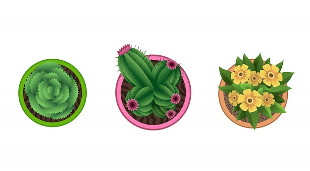 Plant top view in pots. home plant set. cactus, green leaves concept. interior house gardening design. set of different house plants with flowers