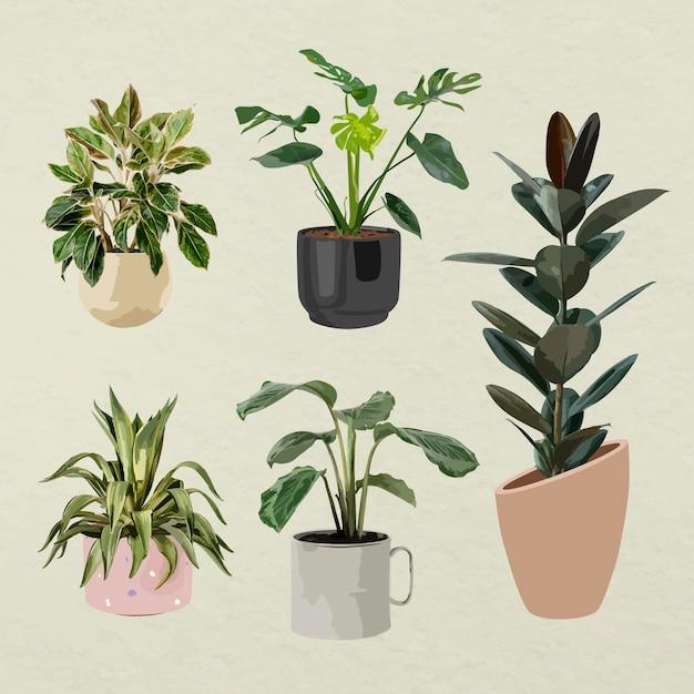 Plant vector art, houseplant set in flower pots
