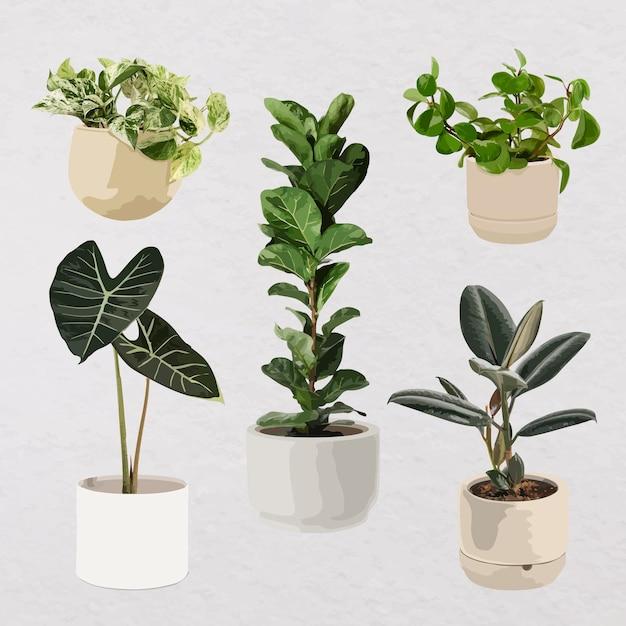 식물 벡터 아트, 화분에 설정된 관엽 식물