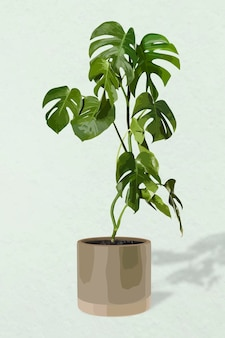 Plant vector art, monstera illustration
