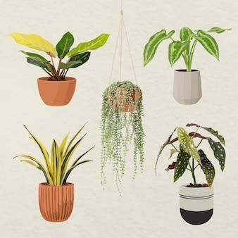식물 벡터 아트 세트, 화분에 관엽 식물