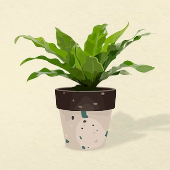 Plant vector image, bird's-nest fern potted home interior decoration