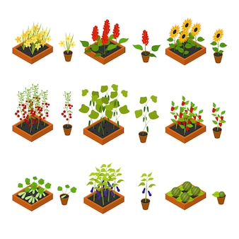 식물, 야채, 과일 및 꽃 묘목 마녀 요소 아이소메트릭 뷰 재배 농업을 설정합니다. 벡터 일러스트 레이 션