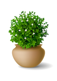 Plant with flowers in vase