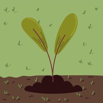 Листья плантации в почве