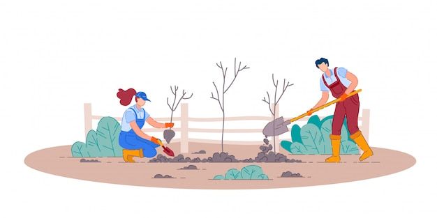 Planting fruit trees.  man and woman gardener people cartoon characters holding shovels and planting fruit tree plants in garden.  gardening and agriculture