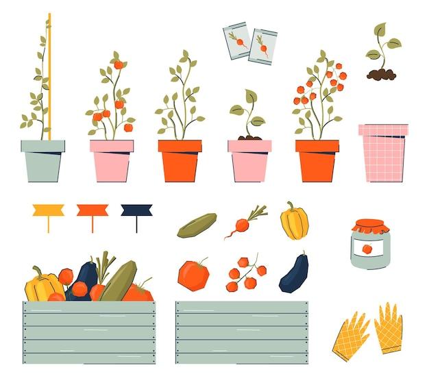 냄비에 묘목과 야채 심기, 수확