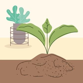 새싹과 관엽 식물 심기