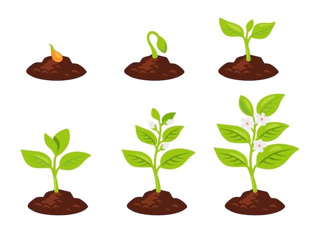 나무 심기. 씨앗은 땅에서 싹을 틔웁니다. 식물이 자랍니다