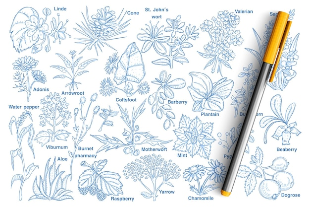 식물과 열매 낙서 세트. 손으로 그린 매자 나무, 나무 딸기, 칡, 카모마일, 개 장미, 알로에, 아도니스, 콘, 린데 및 격리 된 이름을 가진 다른 식물의 컬렉션