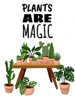 Plants are magic postcard. potted succulent plants on in hygge interior flyer
