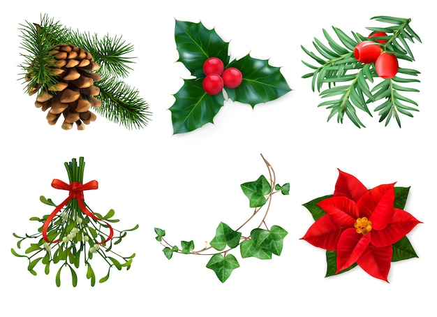 Plants chrismast decoration isolated