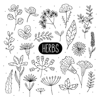 Plants   doodle illustrations, cliparts, set of elements. herbs, flowers. natural ingredient, organic, vegan cosmetics. sticker, icon, hand drawn illustration.