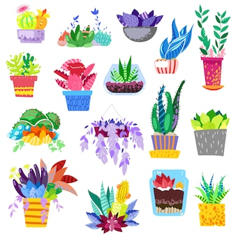 Plants in flowerpots  potted colorful flowery houseplants for interior decoration with botanic collection floral cactuses in pots and color flowers illustration  on white background