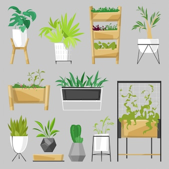 Plants in flowerpots potted houseplants indoor botanic cactuses aloe for house decoration with floral collection of botanical garden illustration isolated on white background