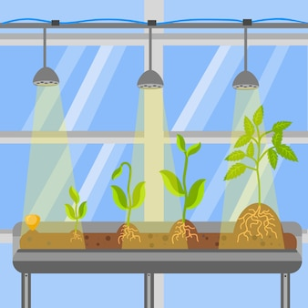 Plants in greenhouse flat vector illustration
