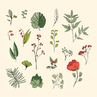 Plants and herbs icons set. elements for design or invitation card
