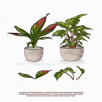 Plants in pot illustration design