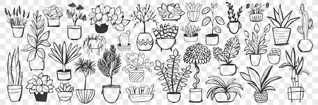 Plants in pots doodle set. collection of hand drawn homegrown plants and flowers in pots for