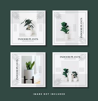 식물 소셜 미디어 게시물 템플릿 컬렉션
