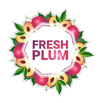 Plum fruit colorful circle copy space organic over white pattern background