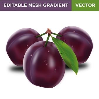 Plum fruit illustration