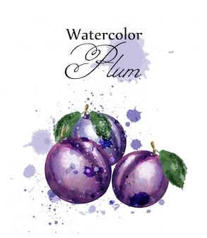 Plum watercolor fruits