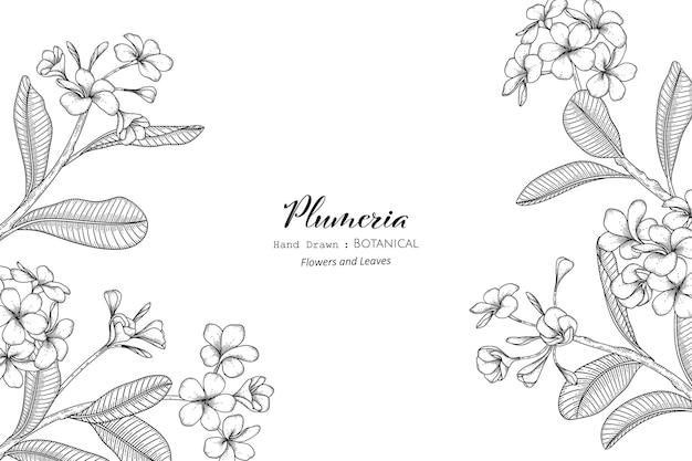 Плюмерия цветок и лист рисованной ботанические иллюстрации с линией искусства.