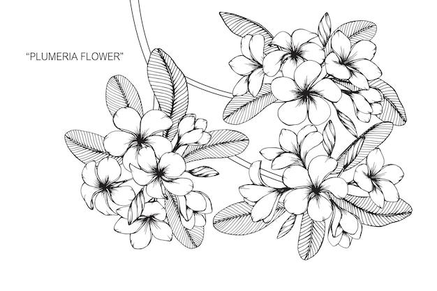 プルメリアの花を描くイラスト