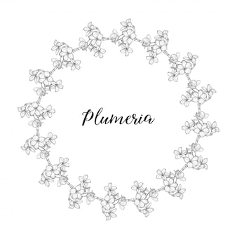 Plumeria flowers drawing and sketch with linear art   a wreath of flowers.