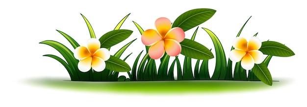 푸른 잔디에 plumeria 꽃