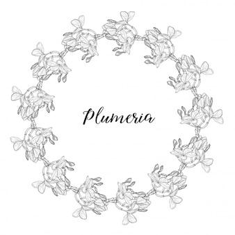 Plumeria. hawaii, bali, indonesia, sri lanka tropical flower necklaces.   illustration