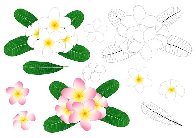 Plumeria outline