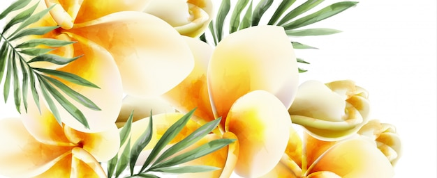 Plumeria yellow flowers watercolor