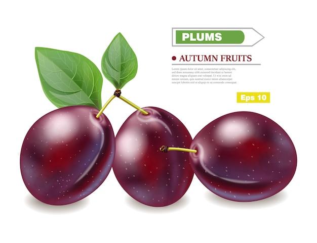 Сливы реалистичные фрукты