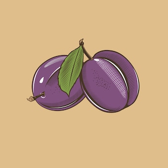 Plums in vintage style. colored vector illustration
