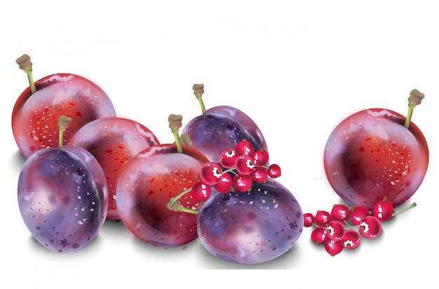 Plums watercolor. autumn fall harvest background