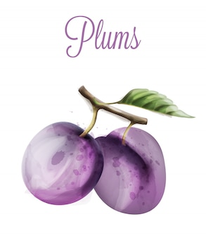 Plums watercolor