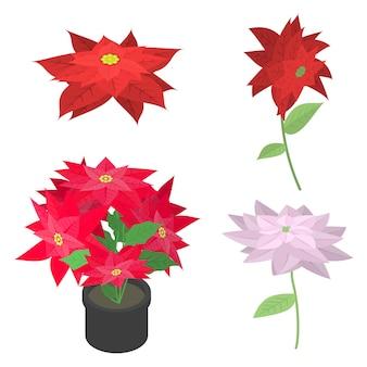 Poinsettia icons set, isometric style