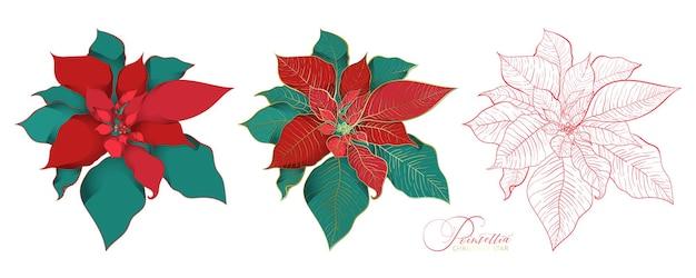 エレガントな装飾スタイルのポインセチア花序